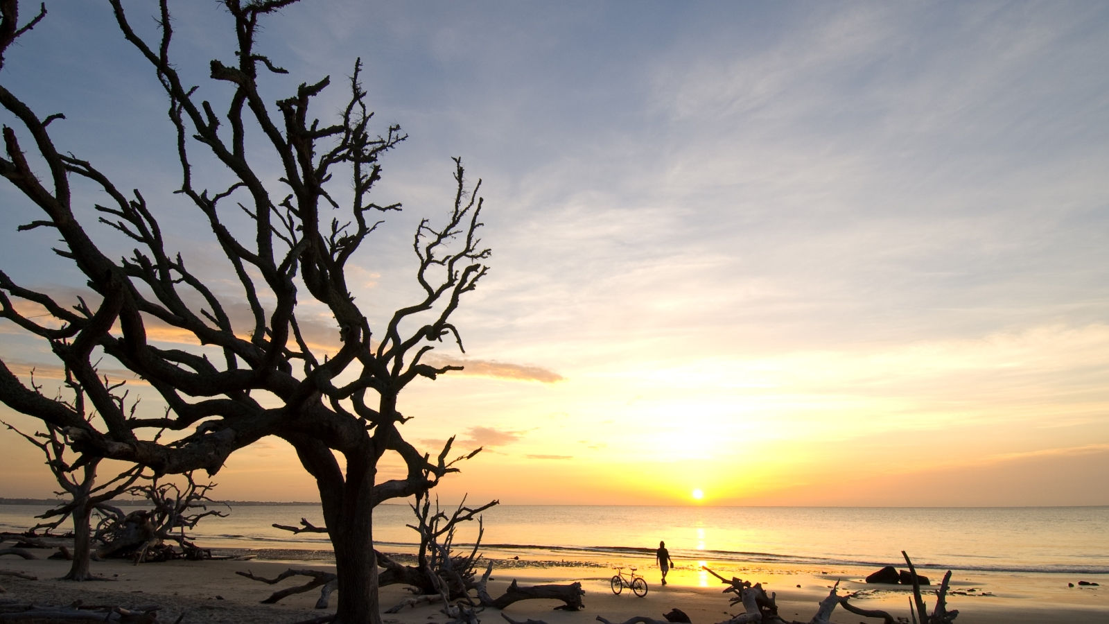 The Westin Jekyll Island - Driftwood Beach